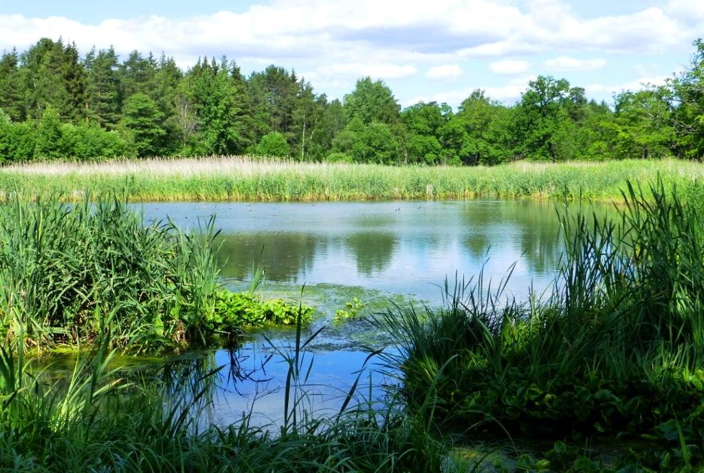Kunskapsdag om skötsel av anlagda våtmarker och dammar 1 okt