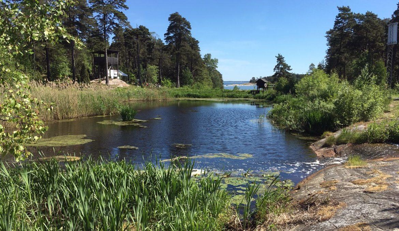 Webbinarium om spillvattenvåtmarker 28 nov