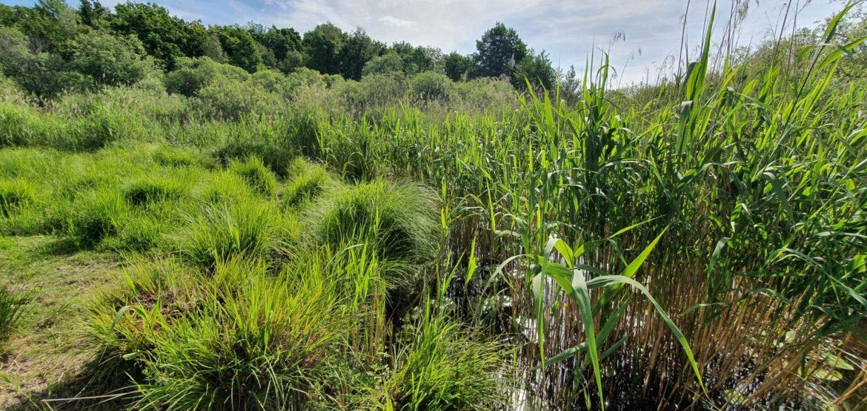 Våtmarksflora finns nu på Våtmarksguiden.se